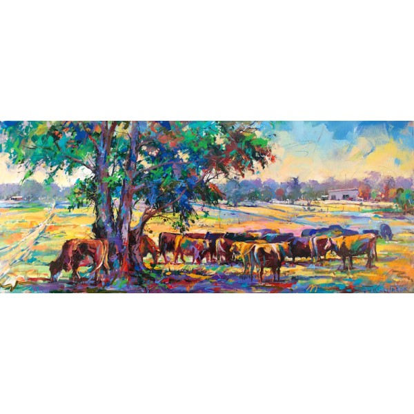 Cattle under Gumtree